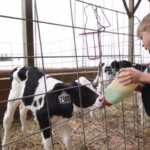 There is also footage of D&B Sternweis Farms, Weber's Farm Store and Heiman Holsteins, which are working together to co-host the July 10-12, 2018 event this summer near Marshfield. (Courtesy of Dan Hagenow Video Creation)
