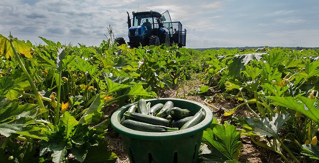 Food Safety for Midcoast Farmers