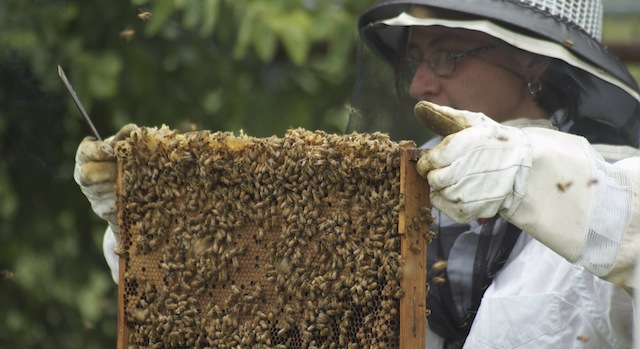 Wyoming Co. beekeepers meeting set for March 12