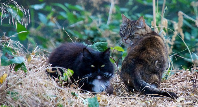 Feral cats make list of invasive species