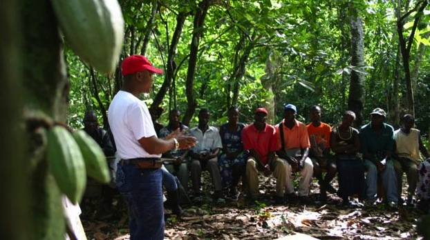 Cocoa producers fight to protect forests