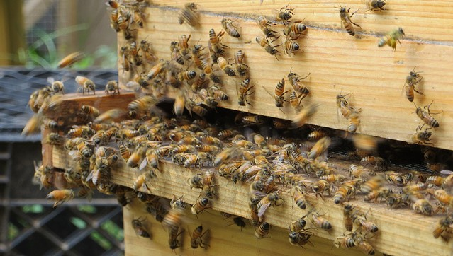 Texas woman loves the buzz of honeybees