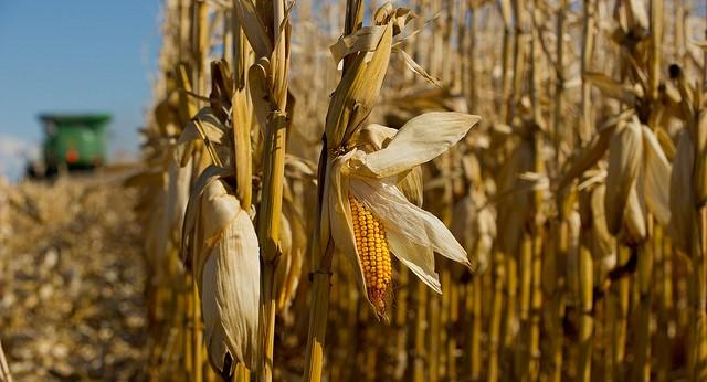 $1.5B settlement in suit over Syngenta corn