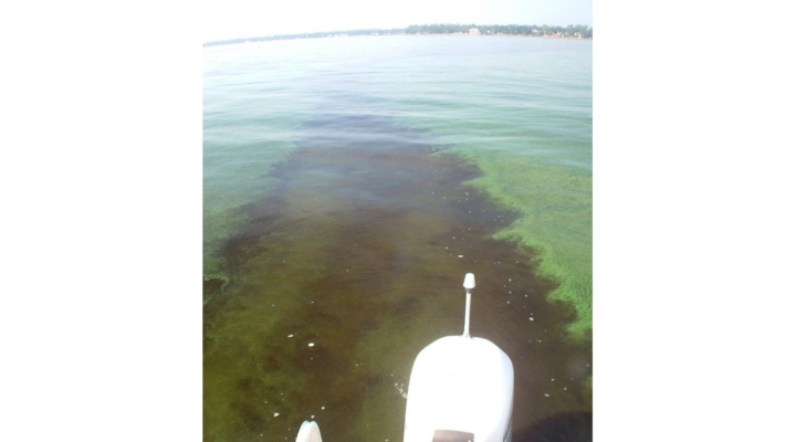 How to prevent harmful algal blooms