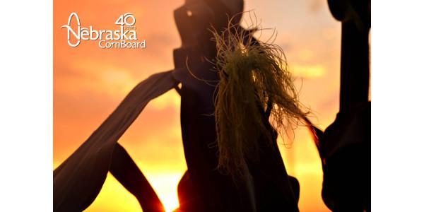 Nebraska Corn Board vacancies