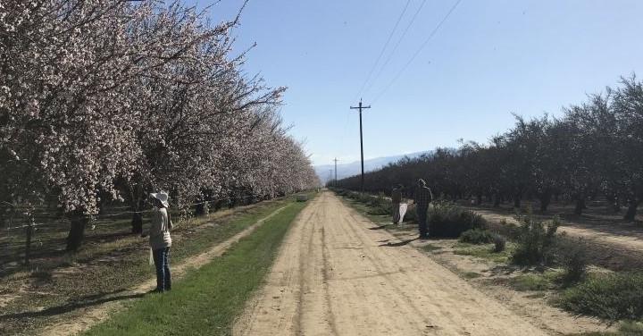UCR researchers to improve pollinator health