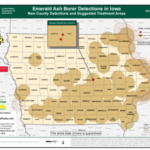 Emerald ash borer (EAB), an invasive insect that kills ash trees, has been detected for the first time in Marshall and Tama Counties.