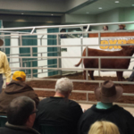 For 29 years, the Michigan Beef Expo has been Michigan's premier beef cattle event. (Courtesy of Michigan Cattlemen's Association)