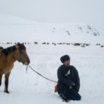 A herder with his sheep during a harsh winter in West Central part of Mongolia. Photo: Chantsaa Jamsranjav