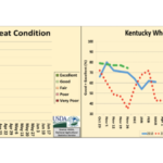 Winter wheat condition was reported as 2% very poor, 3% poor, 34% fair, 45% good, and 16% excellent. (Courtesy of USDA, NASS, Kentucky Field Office)