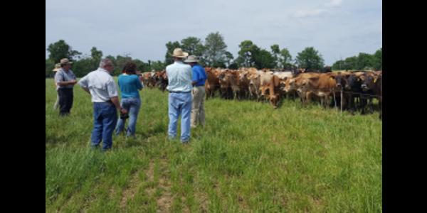 Organic dairy and forage walk April 11