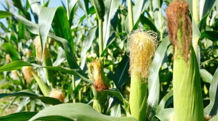 Speaker: GMOs provide bridge to a better life