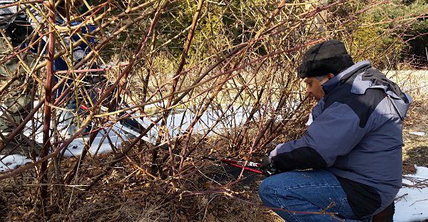 Fruit tree and berry pruning workshop is March 10