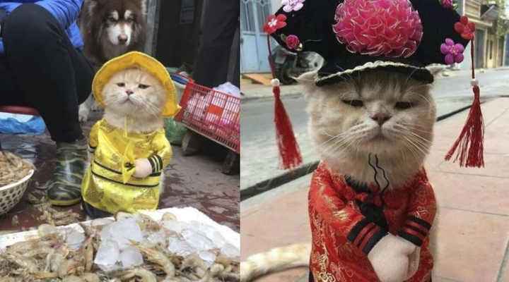 Costumed cat has become the mascot of a fish market