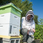 UK entomologist Clare Rittschof is leading a research project to study how spring food availability on farmlands impacts bees. PHOTO: Steve Patton, UK Agricultural Communications