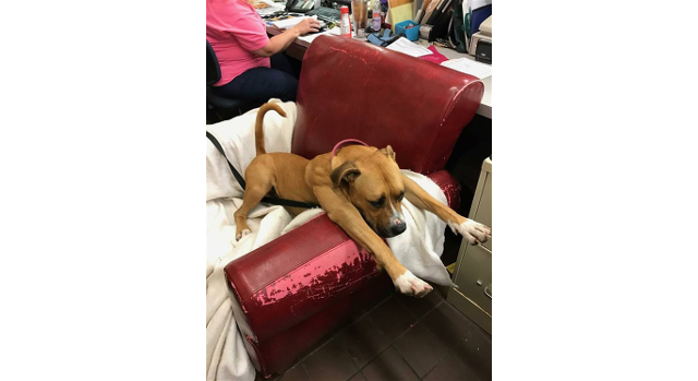 Shelter provides dogs with big, comfy chairs to make them feel at home