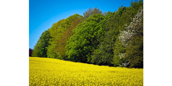 Environmental benefits of woody fruit, nut crops