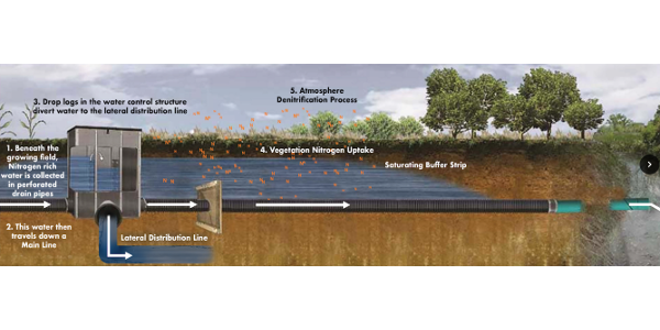 A saturated buffer system has a control structure that diverts the flow from the outlet to a lateral distribution line. The lateral distribution line runs parallel to the buffer and as the water is diverted to this line a saturation occurs. As this saturation, or lateral water movement through the buffer, occurs the vegetation naturally removes the nutrients in the water.