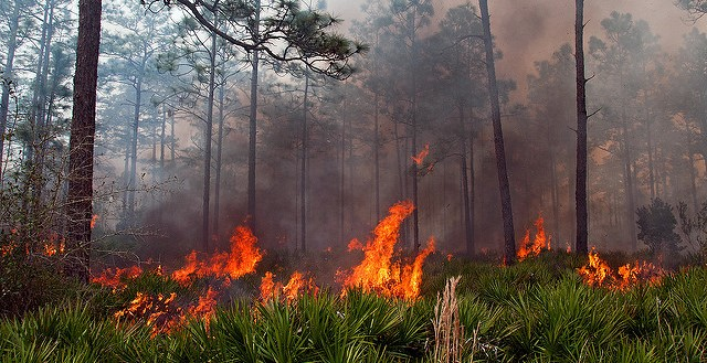 Update On Florida Wildfire Activity Morning Ag Clips