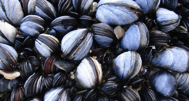 Maine takes stricter stance on shellfish toxins