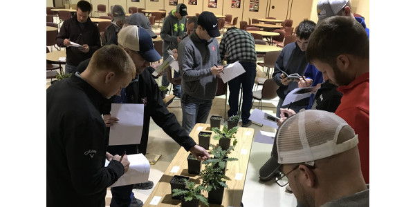 Industry representatives and corn and soybean growers wanting to learn how to better manage corn and soybean pests are encouraged to attend a May 9 field crop scout training offered by Nebraska Extension. (Courtesy of UNL)