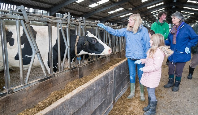 Host a tour of your dairy farm this summer
