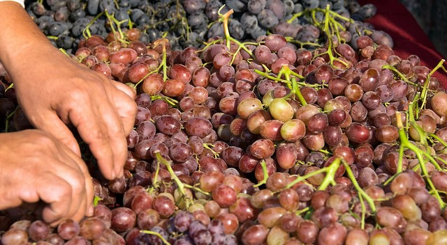 CA table grapes pass 109 million mark again