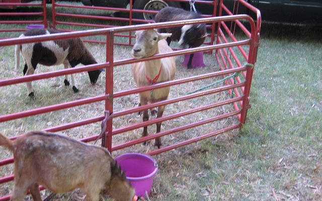 State issues quarantine for Middletown petting zoo