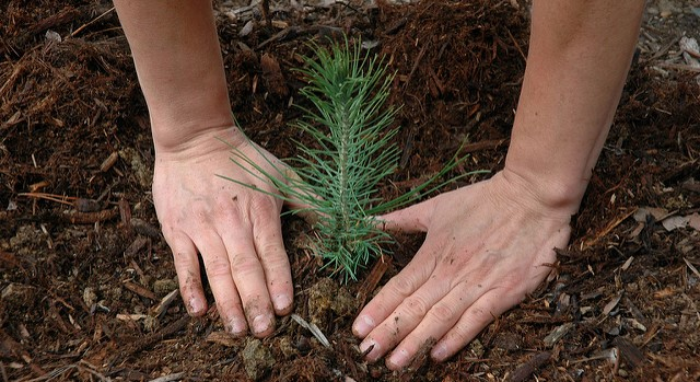 Volunteers plant 6,000 trees for Arbor Day
