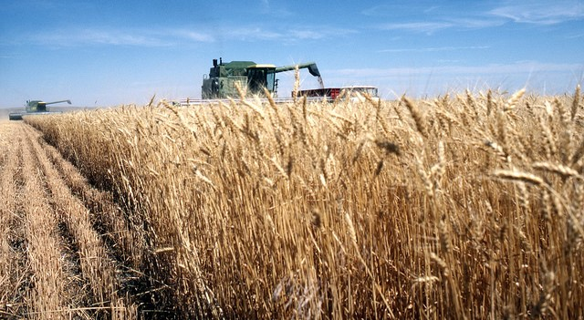 Tariffs will hurt U.S. wheat farmers