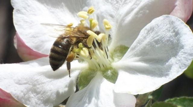 EU to ban pesticides that harm bees