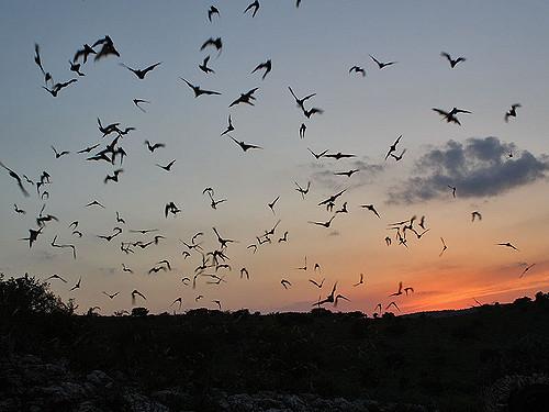 Curious about bats? Try SC Bat Watch!