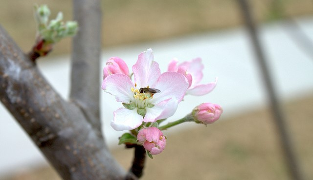 The importance of pollinators in Texas