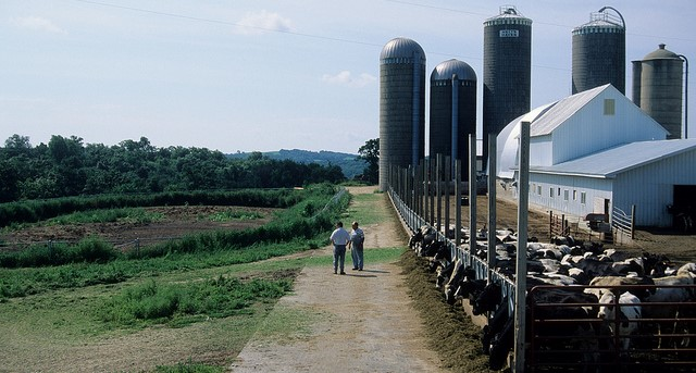 Low milk prices; Four ways ag mediation can help