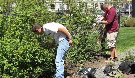 Gardener to address pruning