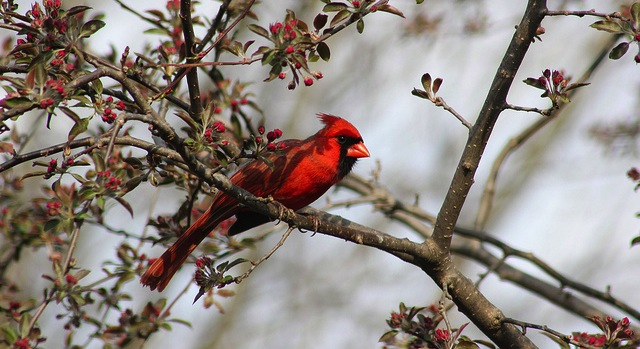 Garden Walk: Trees and Shrubs for Birds