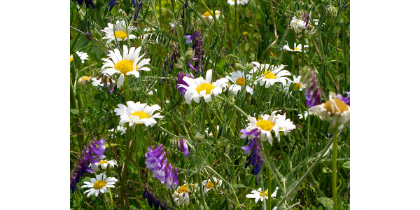 Native plant presentation and sale May 23