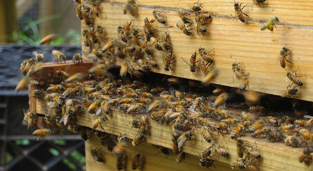 Spring is busy time for bees & their keepers