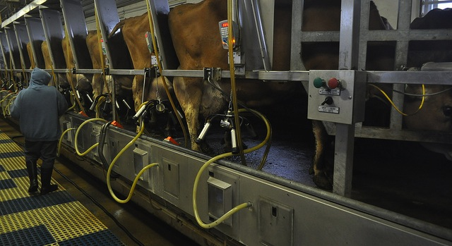 Dairy farmers struggle with low milk prices