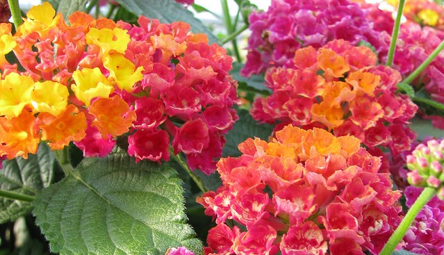 St. Lucie Master Gardeners hold plant sale May 12