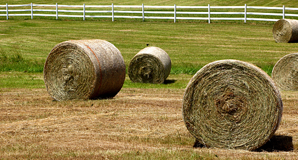 Hay a predominant crop grown in Indiana