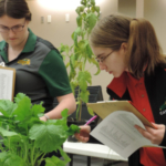 Catherine Ljunggren, an NCTA student from Harvard, Nebraska, at right, studies a plant for crops judging at the national contest. (Mary Pat Hoag photo)