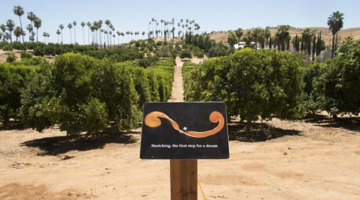 Hidden histories behind Calif. citrus industry
