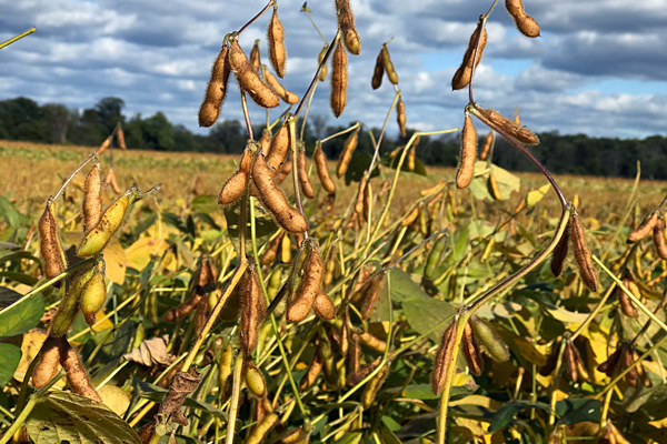 Del. soybean farmers concerned about trade war