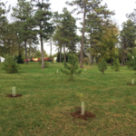 The Kansas Forest Service Demonstration Arboretum and Honor Grove has been awarded Level II status by accrediting organizations and will be the site of an open house on April 23. (Courtesy of K-State Research and Extension)