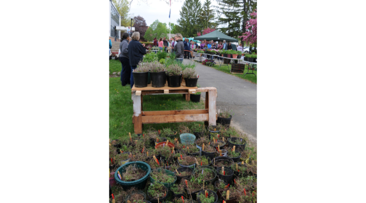 UMaine Extension Plant Sale, May 19