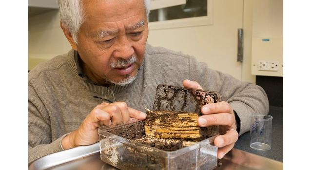 UF entomologist chosen for hall of fame