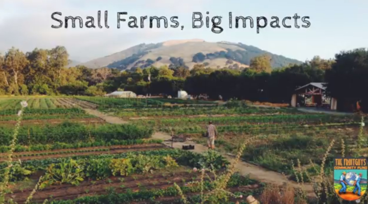13 small farms receive sustainability grants