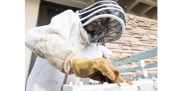 Beekeeping, bee medicine clubs at CSU