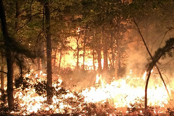 More than 800 acres of forest burn in Pine Barrens